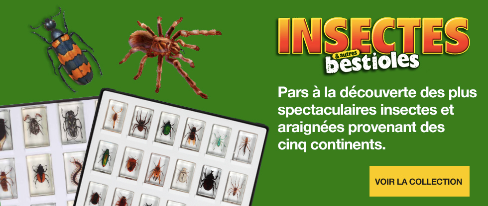 https://www.collections-rba.fr/wp-content/uploads/2021/05/fr_carrusel_insectes_2021.jpg